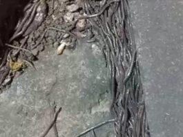 Fenomena Cacing Keluar dari Dalam tanah